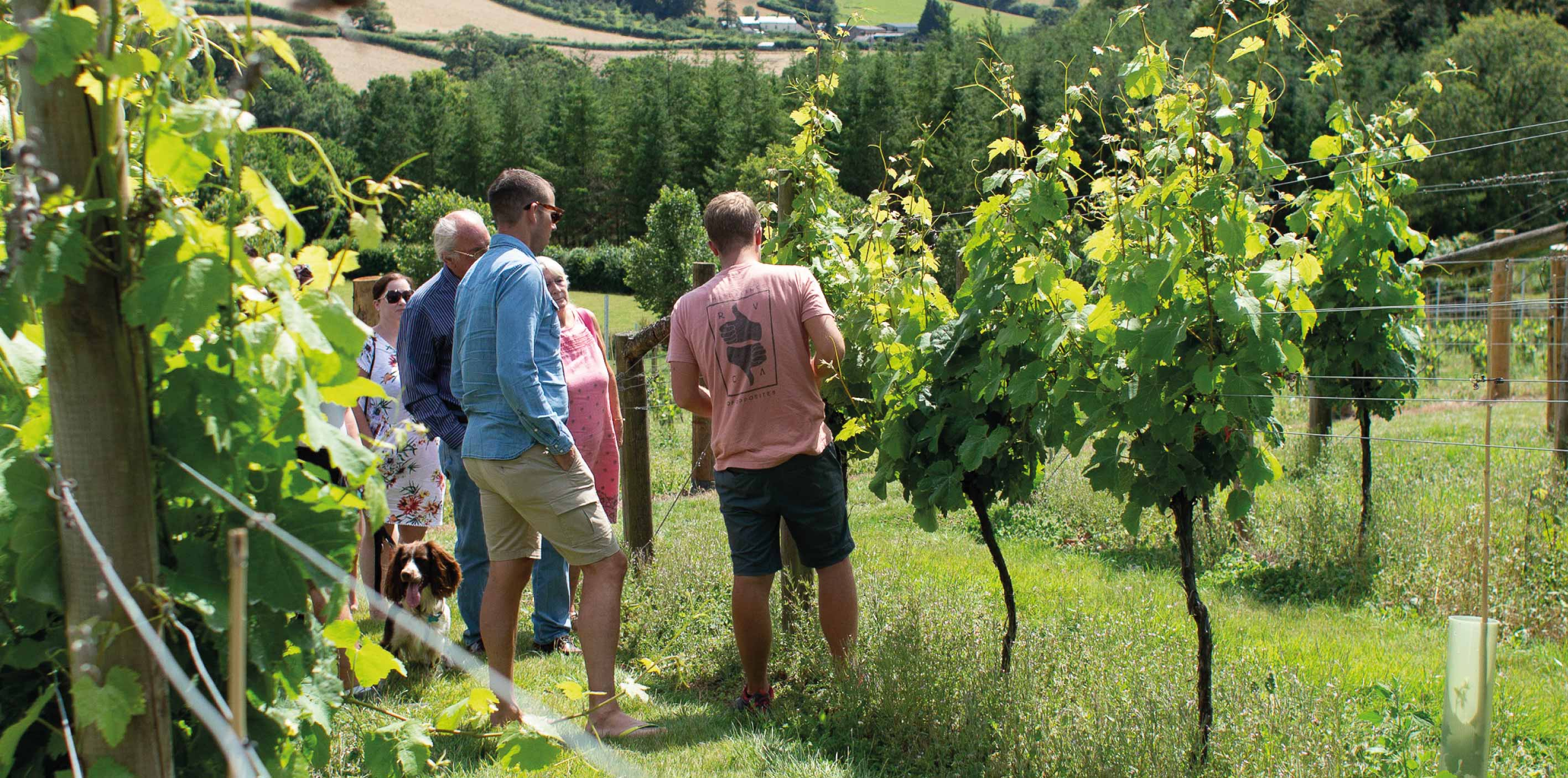 Buy local wine tours this Christmas at Alder Vineyard